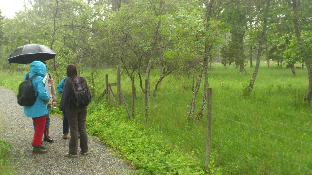 Den röjda körsbärsträdgården (Foto Allan Edblom)