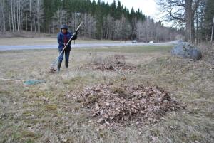 Lövet räfsas ihop av Kerstin Rönnlund (Foto: Kennet Andersson)
