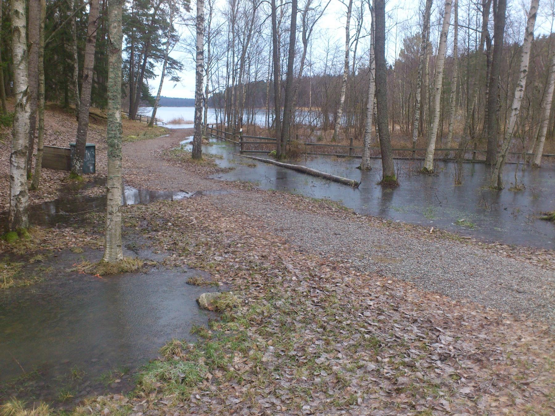 Översjön sydspetsen. Högt vattenstånd p g a bäverdam i norra änden av sjön.