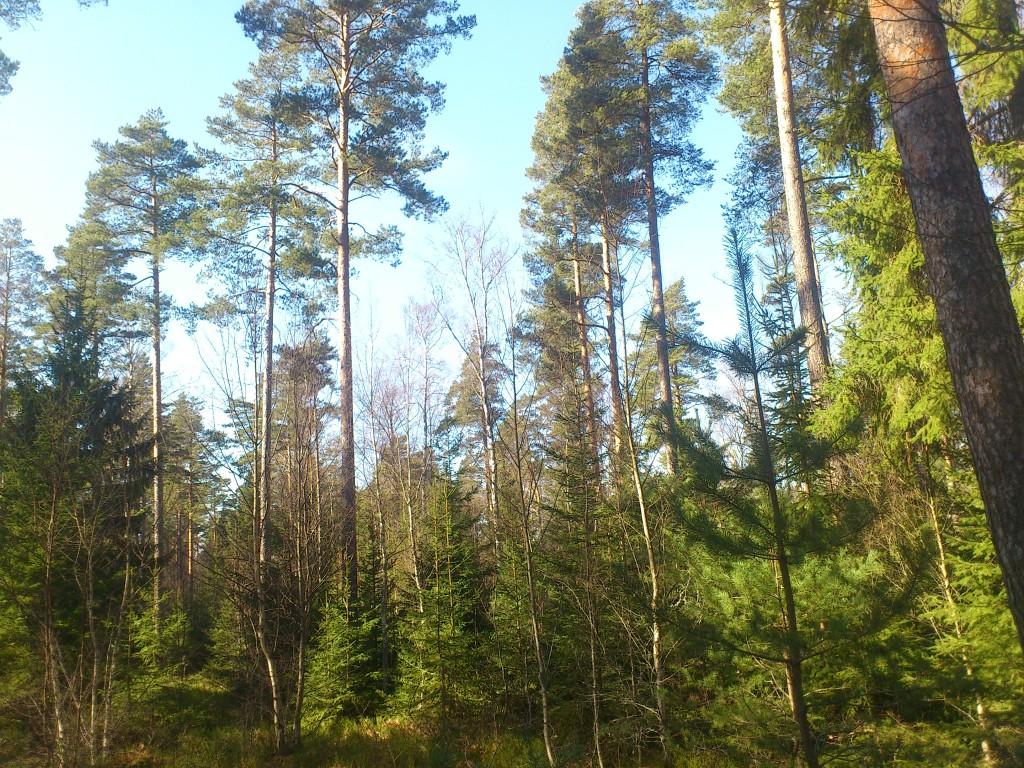 Häradsallmänningen flerskiktad skog