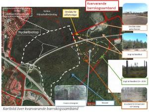Kartbild över kvarvarande barrskogssamband Stäkets verksamhetsområde