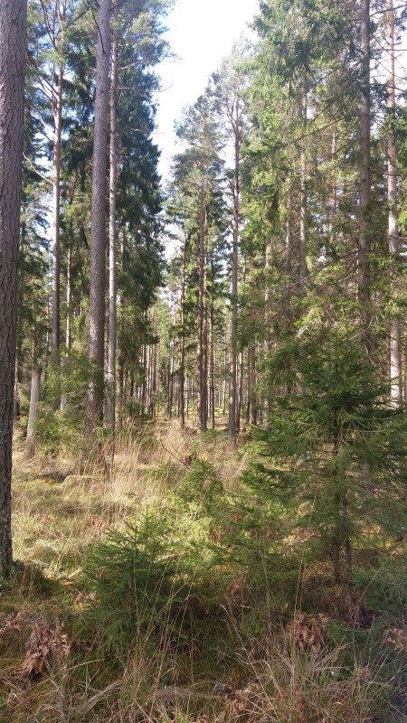 20160429_Excursion Skogssällskapet_10_01