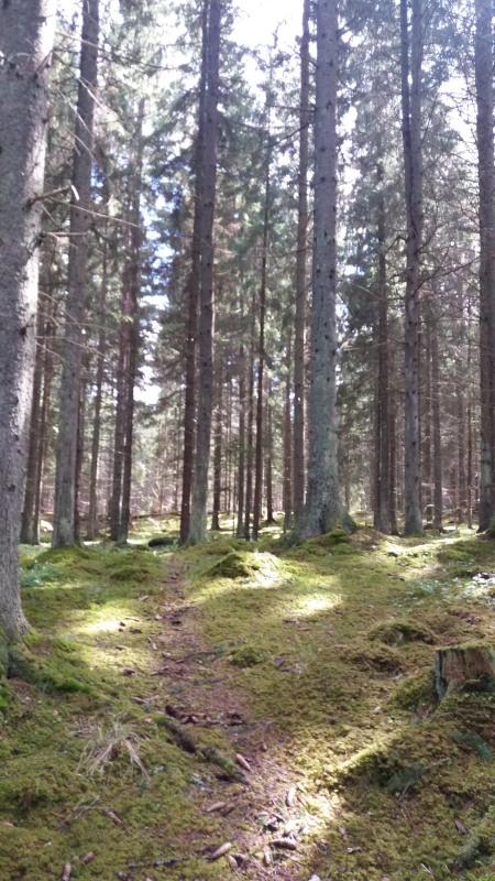 20160429_Excursion Skogssällskapet_11_01