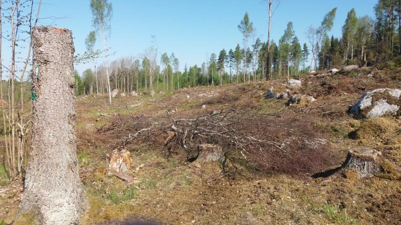Slutavverkning väster Lund