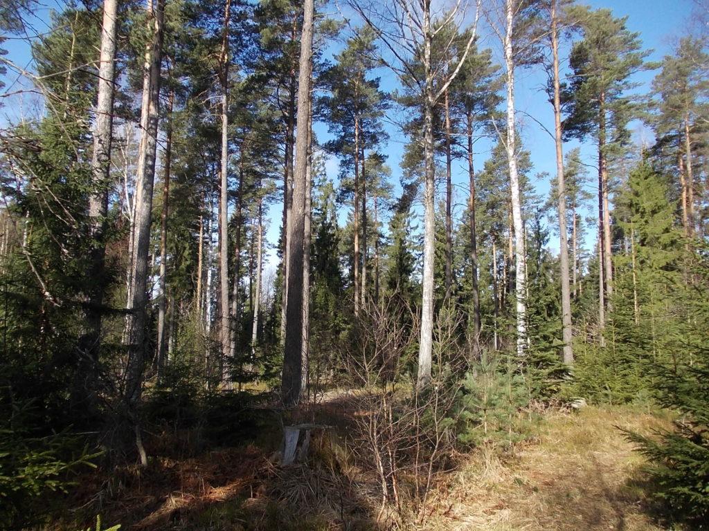 Blandskogsbestånd - f1erskiktad blandskog söder Rotebroleden